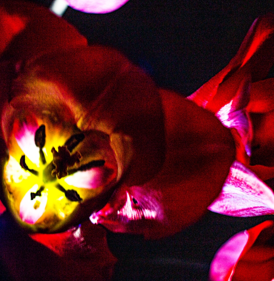 Flashlights and Flowers 1
